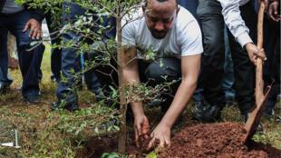رئيس الوزراء الإثيوبي يزرع شجرة