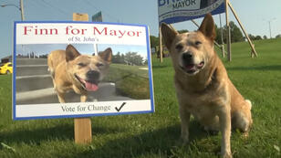 """الكلب """"فان"""" المرشح لرئاسة البلدية"""