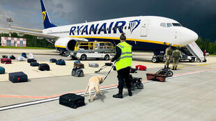 كلب مدرب يفحص الأمتعة من طائرة ريان إير بوينج 737-8AS (رقم الرحلة FR4978) متوقفة في ساحة مطار مينسك الدولي في مينسك ، في 23 مايو 2021.