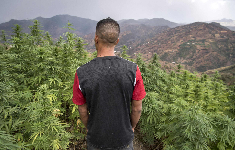 cannabis maroc