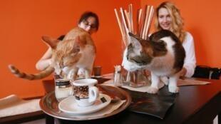 مقهى الحيوانات
