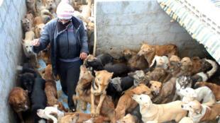 آني أورفلي سيدة سورية ترعى 3500 كلب