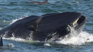 الصورة التي انشترت عبر وسائل التواصل الاجتماعي وتظهر الغواص في فم الحوت