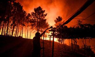 feu_forêt_Portugal_21juillet_2019_afp