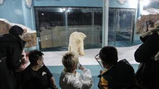 """""""فندق الدب القطبي"""" في الصين"""