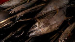 أسماك تونة مكسيكية في سوق للأسماك بمكسيكو سيتي