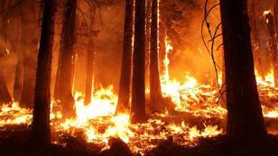 صورة رمزية - حرائق في إحد غابات