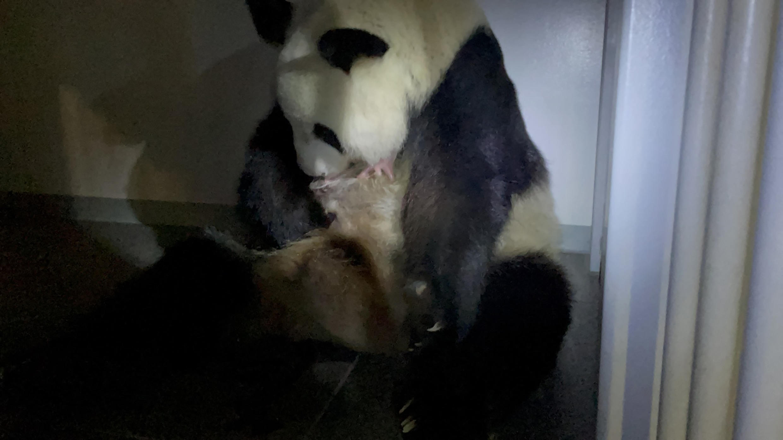 panda_baby_tokyo