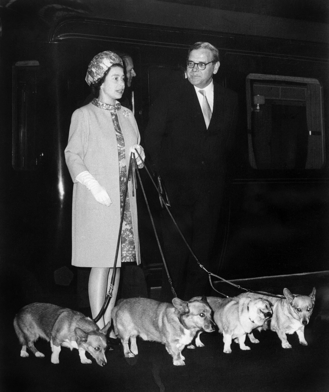 كلاب الملكة إليزابيث