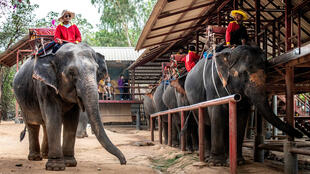 elephants_tourisme_thailande