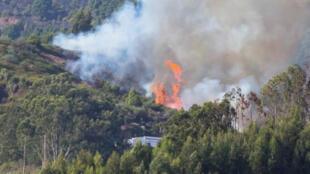 تصاعد ألسنة اللهب والدخان بسبب حريق غابات في جزيرة جران كناريا في إسبانيا