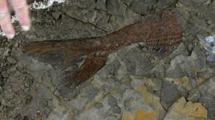 سمك أحفوري عمره 66 مليون عام