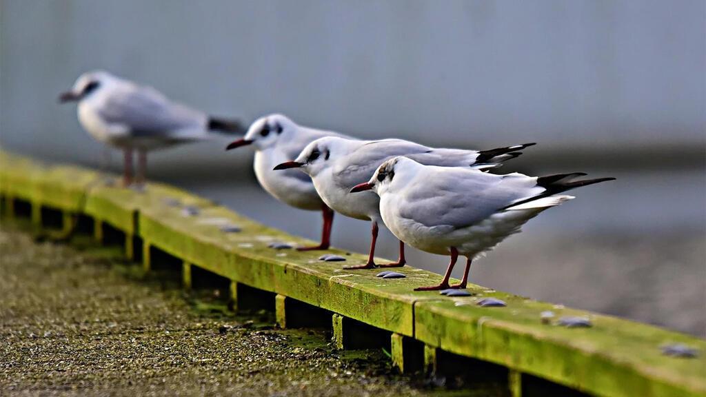 oiseaux_mouettes