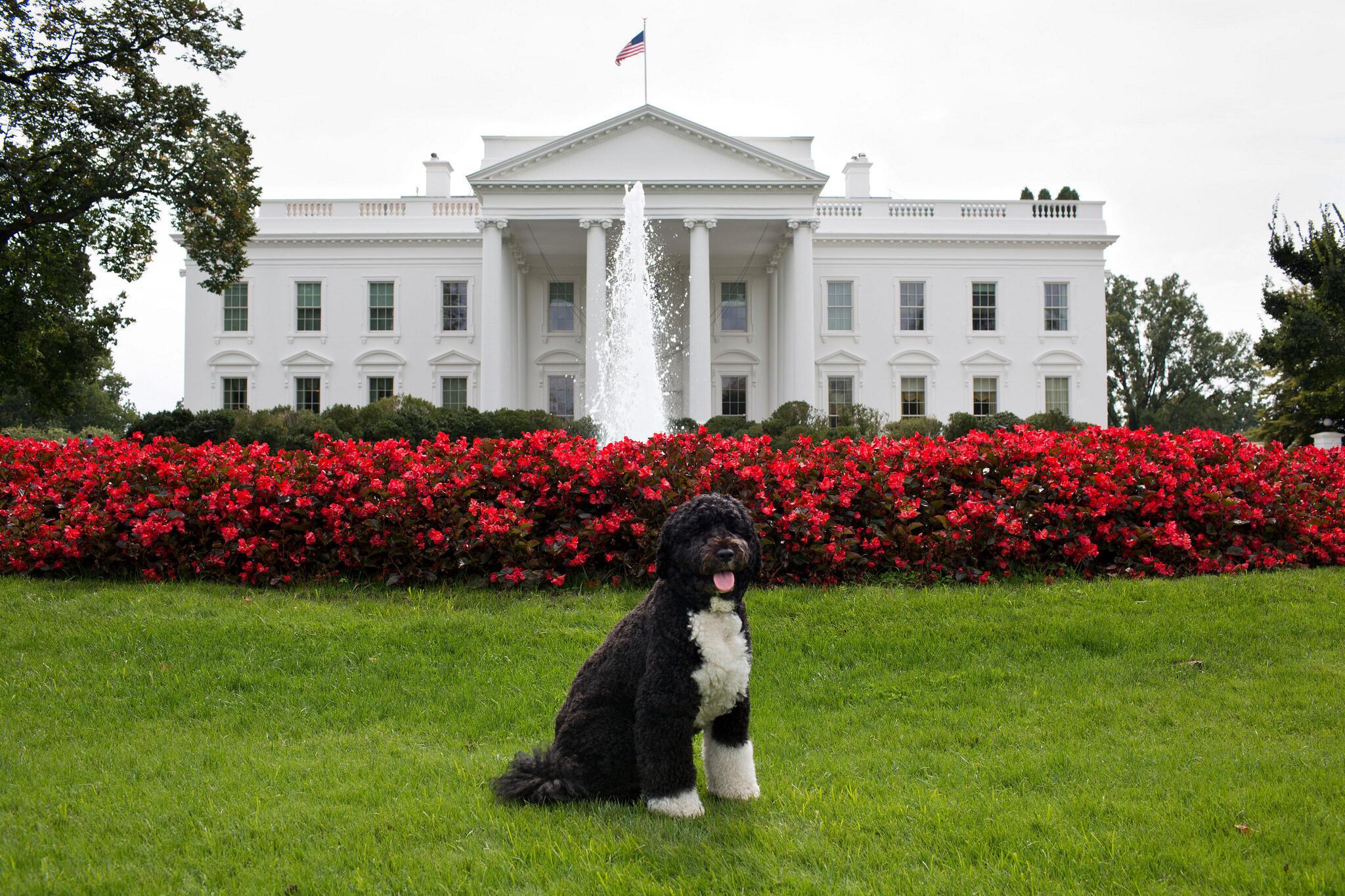 كلب باراك أورباما أمام البيت الأبيض