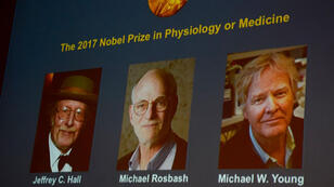 الفائزون بجائزة نوبل للطب جيفري سي. هال ومايكل روسباخ ومايكل دبليو يانغ