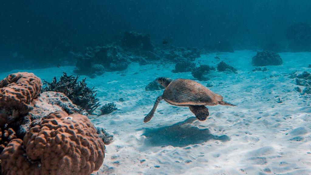 السلاحف البحرية مهددة بالانقراض بسبب الانسان