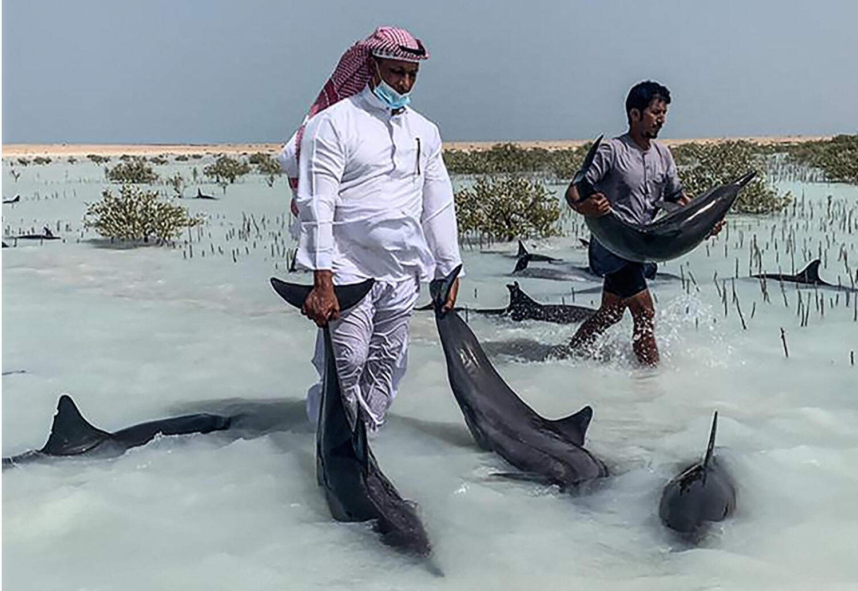 dauphins arabie 26 03 2021