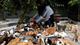 إمرأة إندونيسية تحول منزلها إلى ملجأ قطط الشوارع