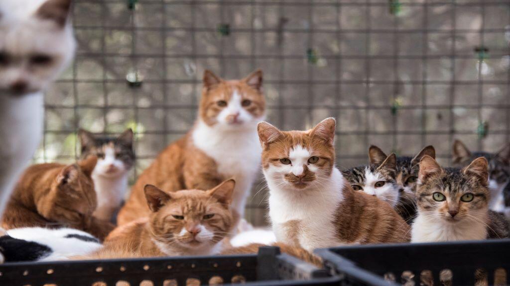 cats_china_shanghai