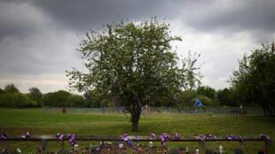 شجرة في بريطانيا