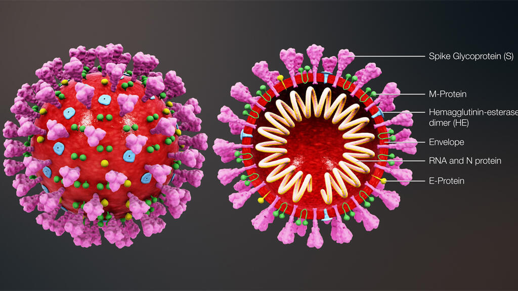 corona_virus_structure_3D